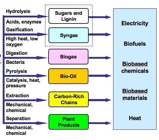 how biomass energy works pdf